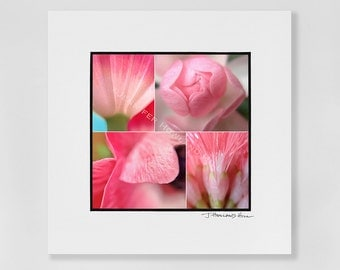 """Pretty in pink, a 3x3"""" photographic print in a 5x5"""" white, acid free black core mat, frames available"""