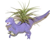 Dinosaur planter in  purple with personalized message and air plant.