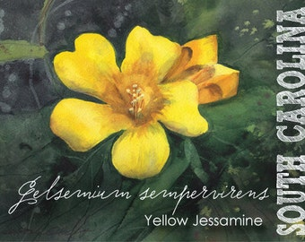 South Carolina, Watercolor ACEO, State Flowers, Yellow Jessamine, Gelsemium sempervirens