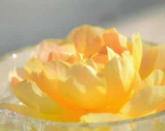 Yellow Rose in Crystal Bowl Blank Photo Note Card All Occasion Card ~ Floral Photography Suitable For Framing