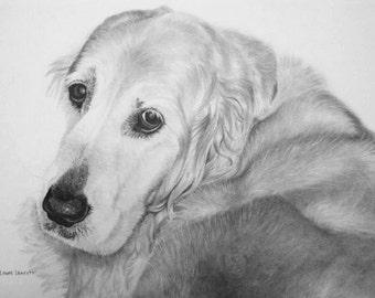Custom Pencil Dog Portrait drawing commission