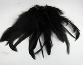 Black feathers  Schlappen Dyed rooster tail feathers 5 to 6 inches