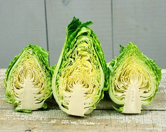 Couer de Boeuf Cabbage
