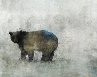 Bear 02: Giclee Fine Art Print/ 13X19