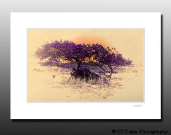 Sunset with Tree, Tree art, Cubicle wall art, purple, tan, Signed Matted Print, Fits 5x7 inch frame