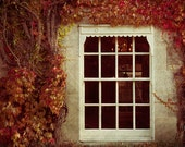 Large photography, large art print, fall leaves gallery photo, window and ivy - Inside