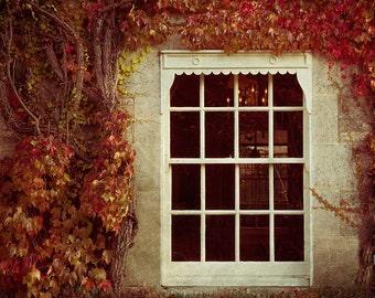 "Nature photography, Fall print,ivy on window art print, fall photography - ""Inside"""