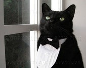 Cat Tuxedo - Classic Black Tie