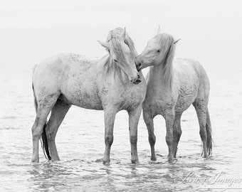Early Morning Horse Play - Fine Art Horse Photograph - Horse - Camargue - Black and White - Fine Art Print