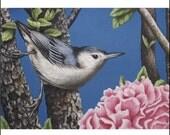 Nuthatch Bird ACEO art print