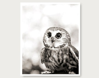 Cute Owl photo, owl print, black and white, owl photography, woodland,  animal, saw-whet owl, nature, wildlife, owl picture, halloween owl