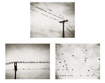 Bird Photo Set - Three Photographs, 3 neutral black and white bird on wire print grey gray modern photography wall art set 11x14, 8x10, 5x7