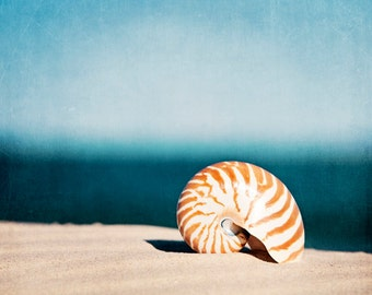 "Shell Photography - beach wall art seashell print blue navy orange beige brown nautilus seashore print nautical photograph, ""By the Blue"""
