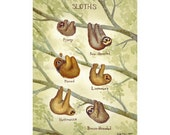Sloths Field Guide Art Print  / Watercolor Painting / Wall Art / Nature Print / Wildlife Art