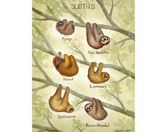 Sloths Field Guide Art Print  / Watercolor Painting / Wall Art / Nature Print / Wildlife Art