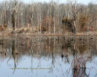 Shiny Swamp Water - West Virginia