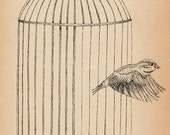 Free At Last- A4 Sparrow art print by Jon Turner- pen and ink birdcage artwork