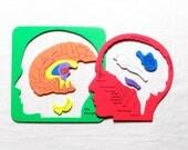 Anatomical Brain Puzzle