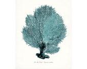 Coastal Decor Sea Fan Sea Coral Natural History Giclee Art Print 8x10 tide pool