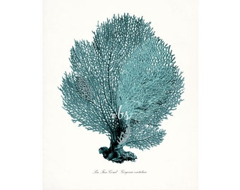 Coastal Decor Sea Fan Sea Coral Natural History Giclee Art Print 8x10 tide pool