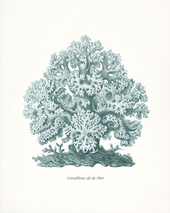 Coastal Decor Sea Coral Giclee Art Print E. Haeckel Natural History Fantasy Sea Coral Wall Decor No. 1 8x10 sea glass