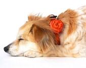 Rosalicious Leather Dog Collar - California Tangerine