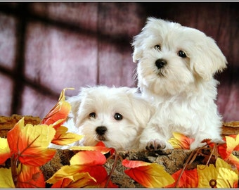 4 Dog Puppy Maltese Autumn Puppies Dogs Stationery Greeting Notecards/ Envelopes Set
