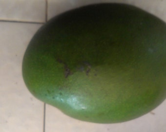 Hayden Mango Seed