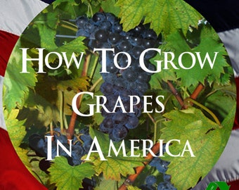 How To GROW GRAPES In AMERICA Illustrated Rare Book On The Culture of American Grapes and Varieties
