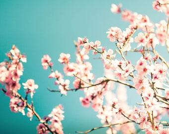 cherry blossom art floral print cherry blossom print flower photography floral botanical print nursery decor nature print pink peach teal