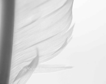 Feather Fine Art Photography Macro Whimsical Black White Bird Soft Grey Gray Ombre Minimalist Nursery Home Decor Wall Art