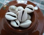 13 Cowrie Shells Powerful Magick