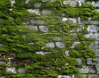 4ft x 3ft / Vinyl Photography Backdrop / Moss Rock Wall