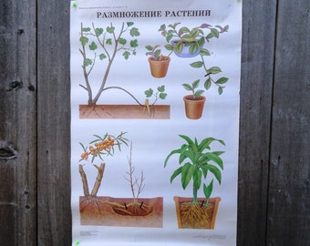 Botanical School Poster - reproduction of Plants