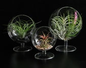 Pedestal Glass Orb Terrariums- Set of 3 Different Sizes WITH Plants