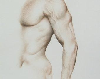 12 x 16 HANDMADE MALE TORSO drawing by Ewa Gawlik - Made to Order (4/20)
