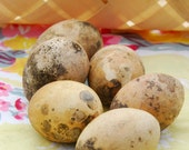 Gourd Seeds Nest Egg Gourds Birds Egg Gourd Seeds Vegetable Garden