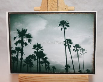 ACEO, ATC, Artist Trading Card, Palm Trees, black and white photography