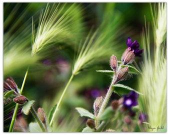 Purple and green wild flowers print, fine art photography print