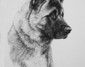 Akita dog art dog lover gift dog gift fine art LE art print from an original charcoal drawing available unmounted or mounted ready to frame