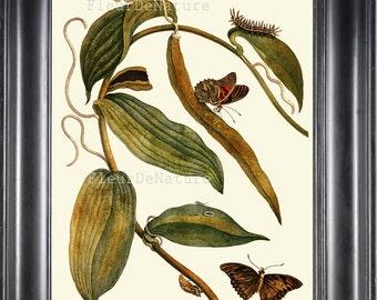 BOTANICAL PRINT Sibylla 8x10 Botanical Art Print 5 Beautiful Vanilla Plant Butterfly Summer Garden Nature to Frame Home Decor