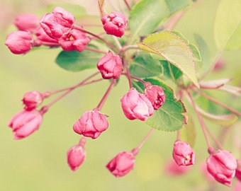 Pink Flower Buds Blooming Flowers Spring Photography Cherry Blossoms Pink Green Colorful Square Nature Photography