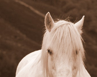 Sepia horse photo, white horse art, black and white horse print, equine art, pink, teal, various sizes