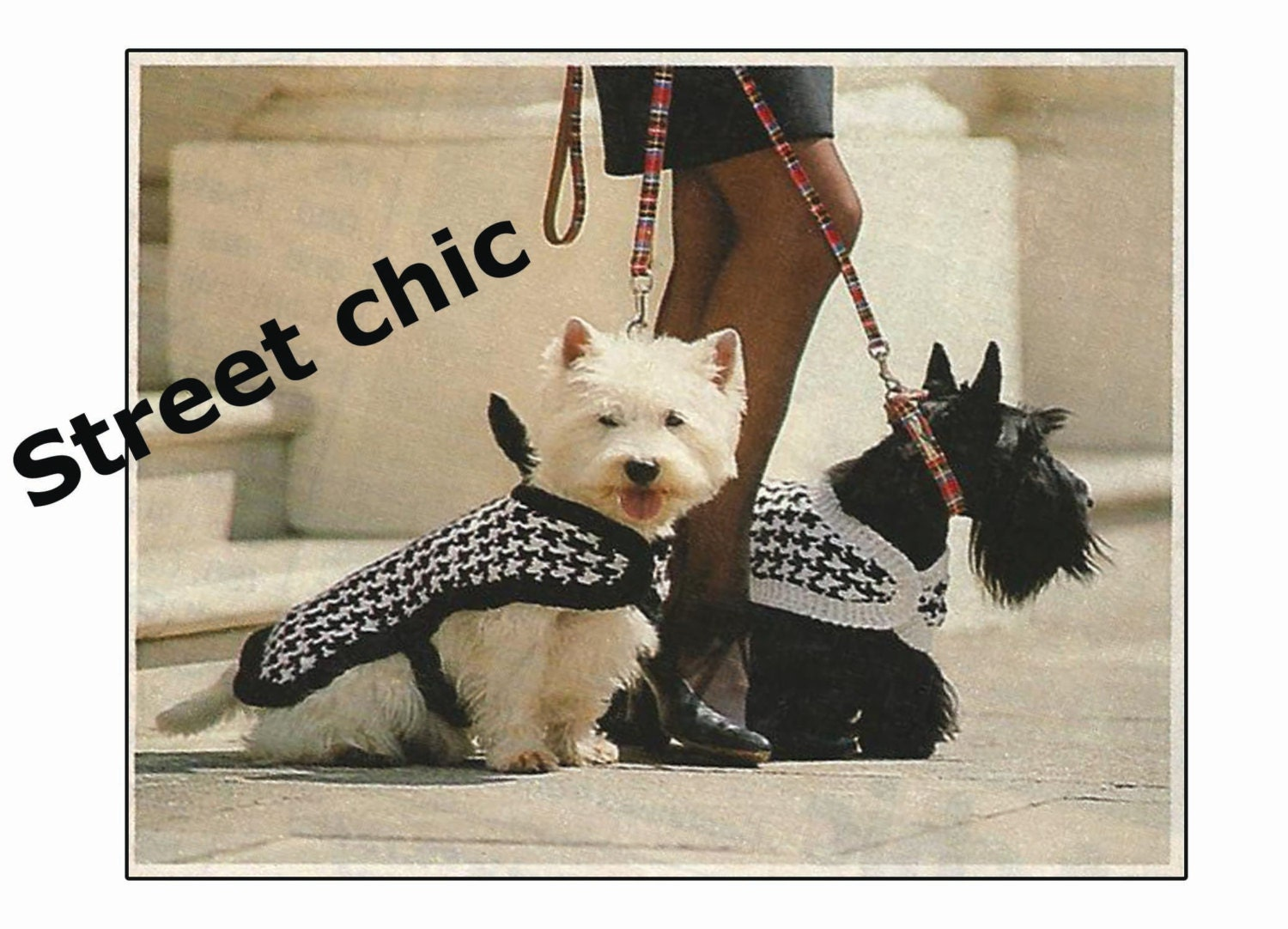 Dog Coat Knitting Pattern for Westie Dog PDF