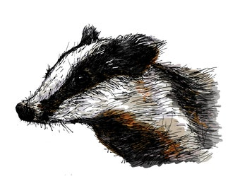 Badger Illustration Art Print