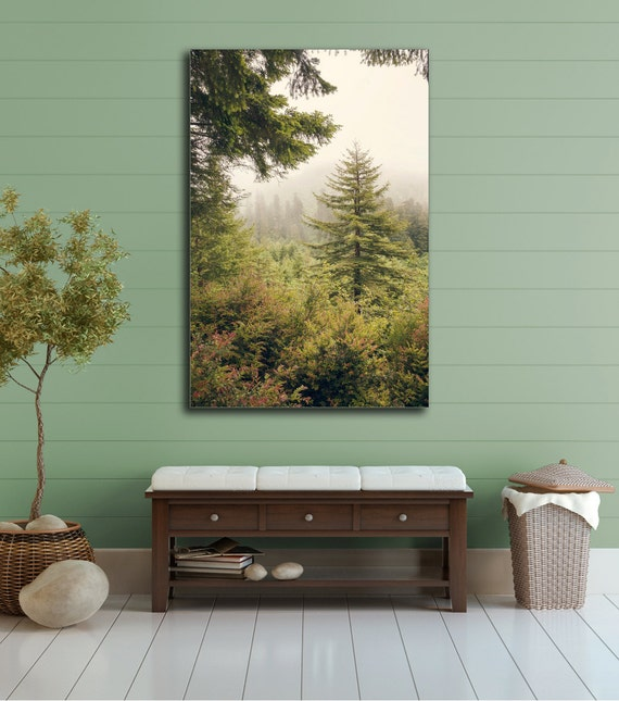 Home Decor Nation: Into The Mist Canvas Gallery Wrap Redwood National