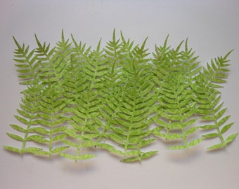 Die Cut Fern Leaves -2c