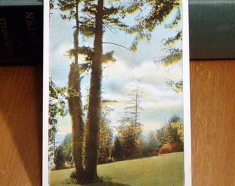 Vintage Postcard, Kinnear Park, Seattle, Washington 1920s Paper Ephemera
