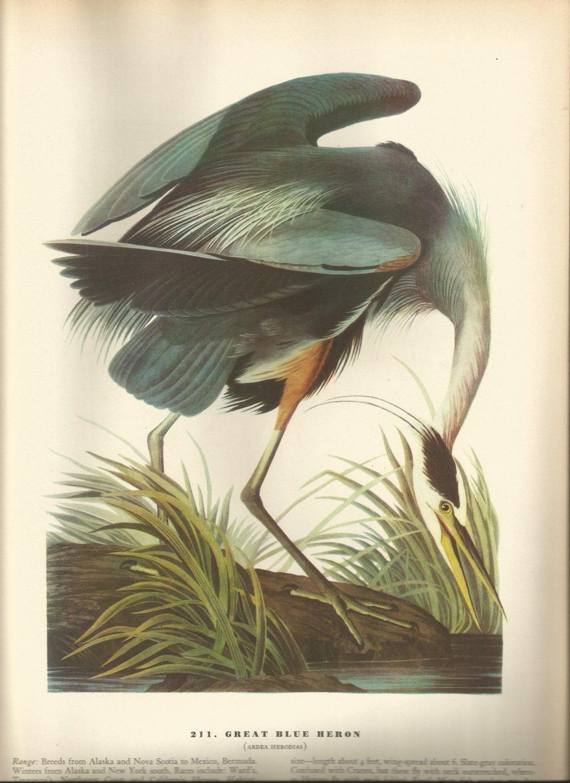 Original Vintage 1937 John James Audubon Birds Of America
