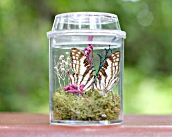 Butterfly Terrarium Kit for Kids, , Eco Friendly Gift, Educational, Classroom Display, Birthday Party Favor, Naturalist